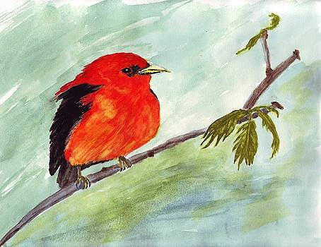 Scarlett Tanager by Connie Morrison
