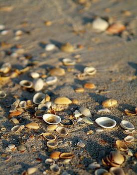 Scattered Shells by Brian Puyear