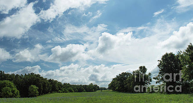 Scenic Cloud View by Diane Friend