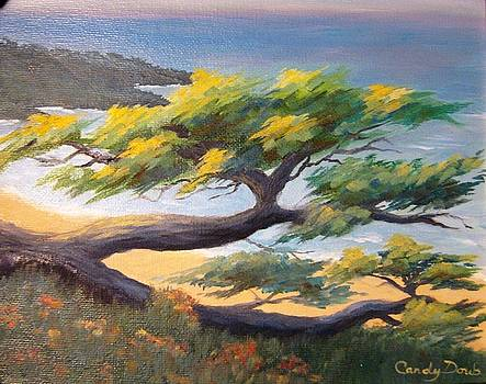 Scenic Drive Carmel Cypress by Candace Doub