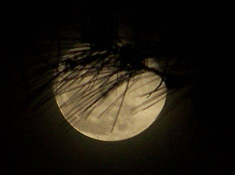 Scenic Full Moon by Susan Anderson