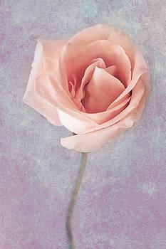 Elvira Pinkhas - Scent of A Rose