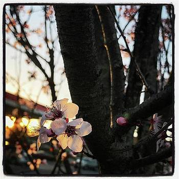Scent Of Spring. 春の香り。 by Alicia Boal