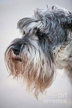 Heiko Koehrer-Wagner - Schnauzer Pet Face