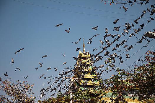 Erika Gentry - Schwedagon Pagoda IIII