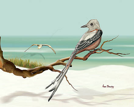 Scissor Tailed Flycatcher by Anne Beverley-Stamps