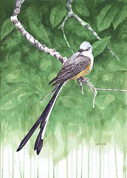 Scissortail Flycatcher by Steve Hamlin