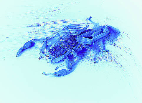 Blue Scorpion by Erich Grant