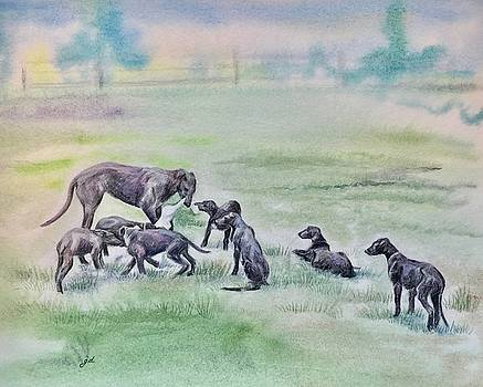 Scottish Deerhound Mom and Pups Playing by Gail Dolphin