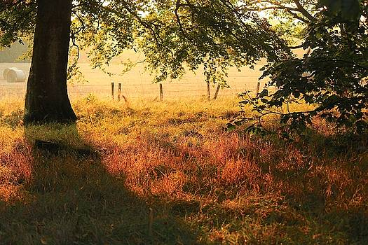 Scottish Farm by Jim Cotton