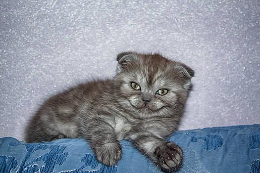 Kitten Smiled by Tatiana Tyumeneva