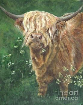 Scottish Highland Bull by Elizabeth Ellis