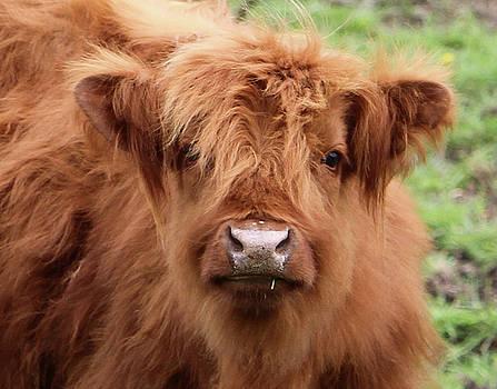 Scottish Lad by Susie Gordon