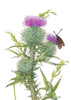 Scottish Spear Thistle by Lynne Henderson