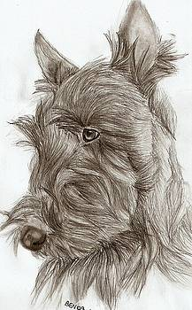 Scottish Terrier by Be N