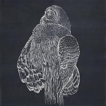 Scratch board Owl by Darren Cannell