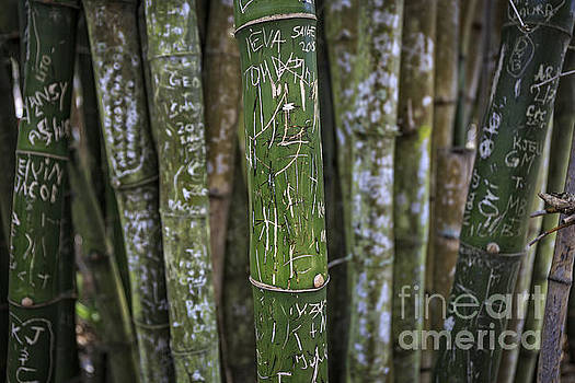Edward Fielding - Scratched Bamboo