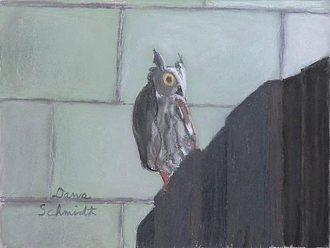 Screech Owl on Gate to Pergola by Dana Schmidt