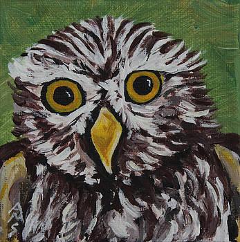 Scruffy Owl by Annette M Stevenson