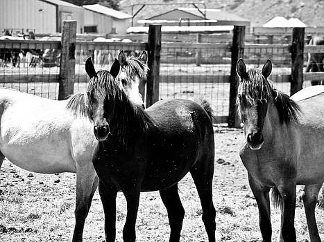 SD Mustangs by Kelli Chrisman