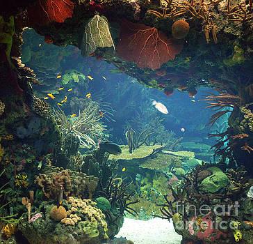 Ariadna De Raadt - sea aquarium