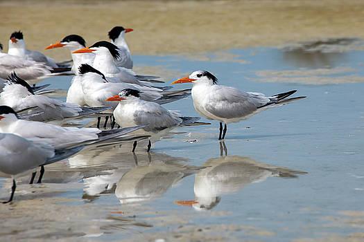 Sea birds by Gouzel -