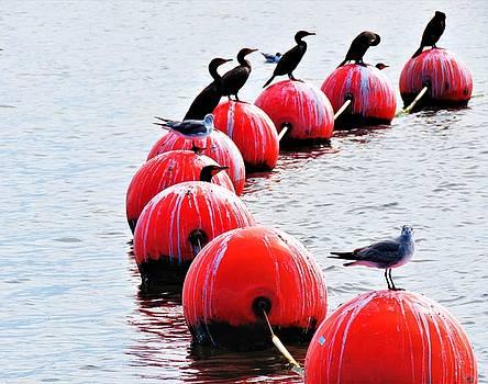 Sea Birds on Buoy    by Mario Carta