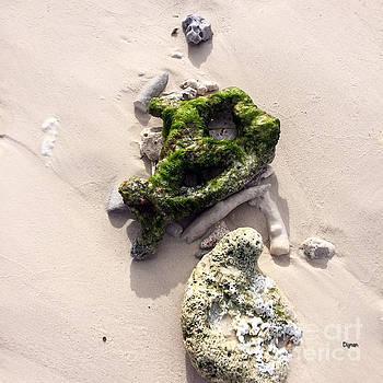 Sea Bones by Steven Digman