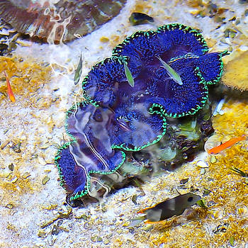 Art Block Collections - Sea Creatures