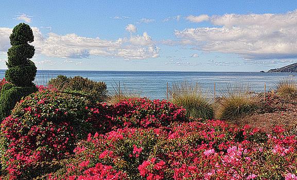 Sea Garden by Lorrie Morrison