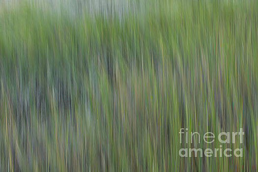 Sea Grass Whimsy by Dale Powell
