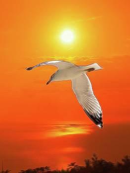 Sea Gull by Athala Carole Bruckner