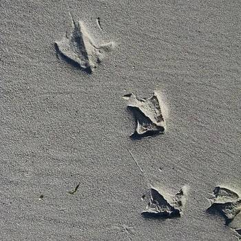 Sea Gull? Foot Prints. #seagull by Beth Sawickie