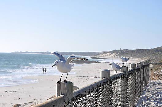 Richard Benson - Sea Gull