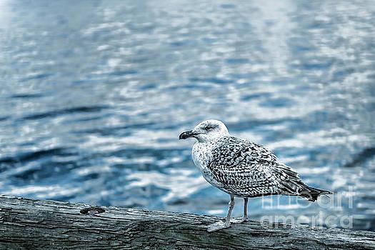 Tamyra Ayles - Sea Gull