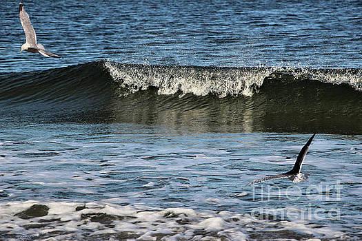 Sandra Huston - Sea Gulls Fishing In The Waves