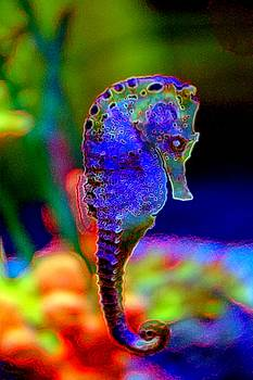 Sea Horse by Michael Todd