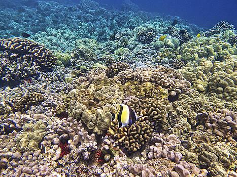 Sea Life by Jen Morrison