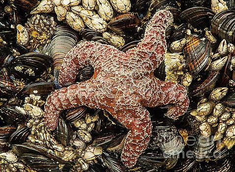 Sea Life by Nick Boren