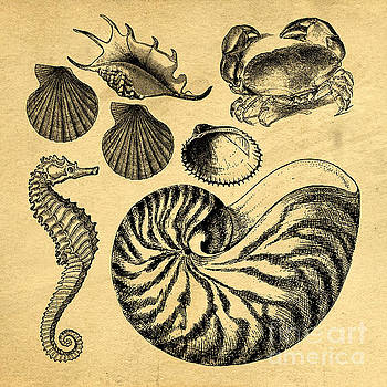 Edward Fielding - Sea Life Vintage Illustrations