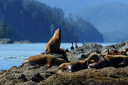 Sea Lion by Christian Heeb