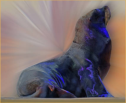 Sea Lion constancesart by Constance Lowery