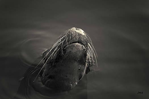 David Gordon - Sea Lion V Toned