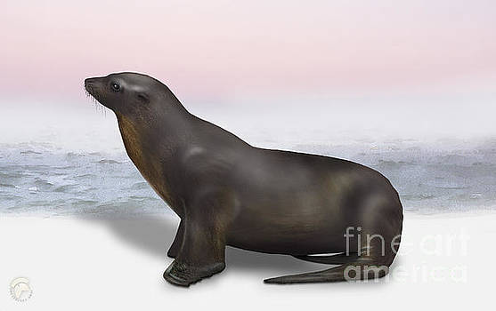 Sea Lion Zalophus californianus - Marine Mammal - Seeloewe by Urft Valley Art