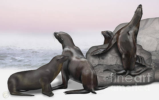 Sea Lion Zalophus californianus - Marine Mammals - Seeloewen by Urft Valley Art