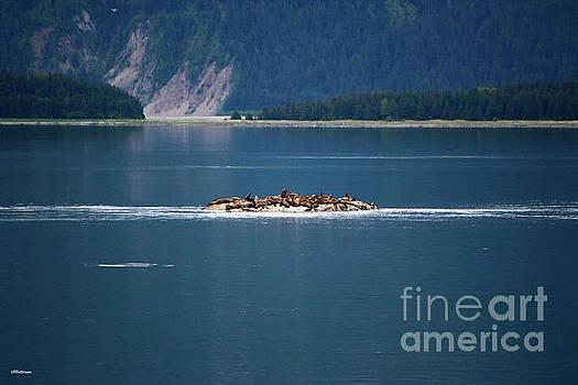 Sea Lions Alaska Three by Veronica Batterson