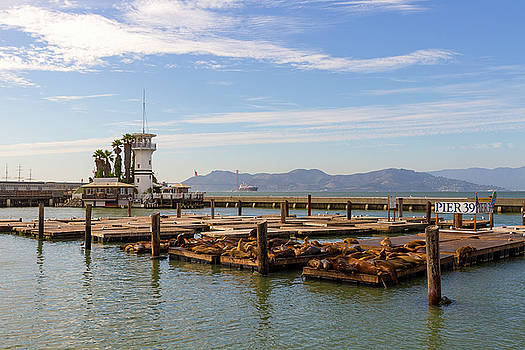 Sea Lions at Pier 39 in San Francisco by David Gn