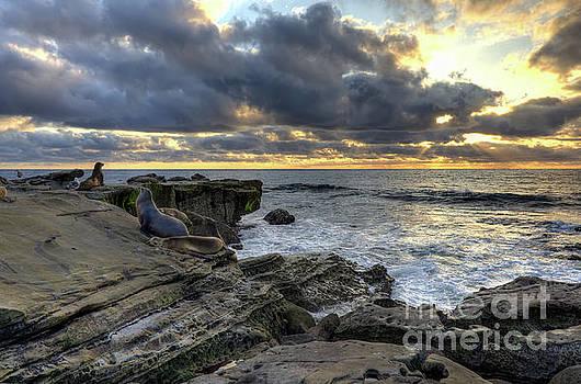 Sea Lions At Sunset by Eddie Yerkish