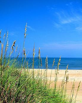 Sea Oats and Blue Skies At Avon Beach  by Angela Davies