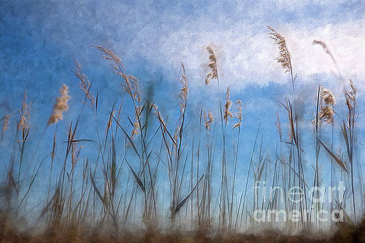 Dan Carmichael - Sea Oats and Sky on Outer Banks AP